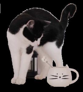 MňauShop.sk 1 - pre milovníkov mačiek