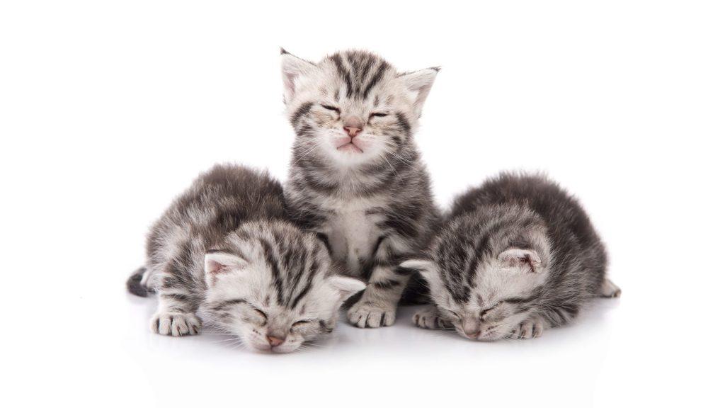Ako sa postarať o mačiatka a čo robiť, ak nájdete opustené mačiatko? 1 - pre milovníkov mačiek